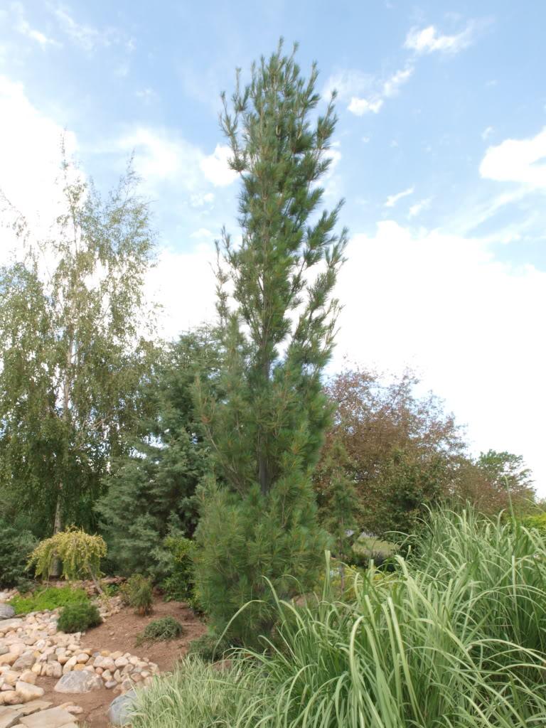 Evergreen Trees Omaha