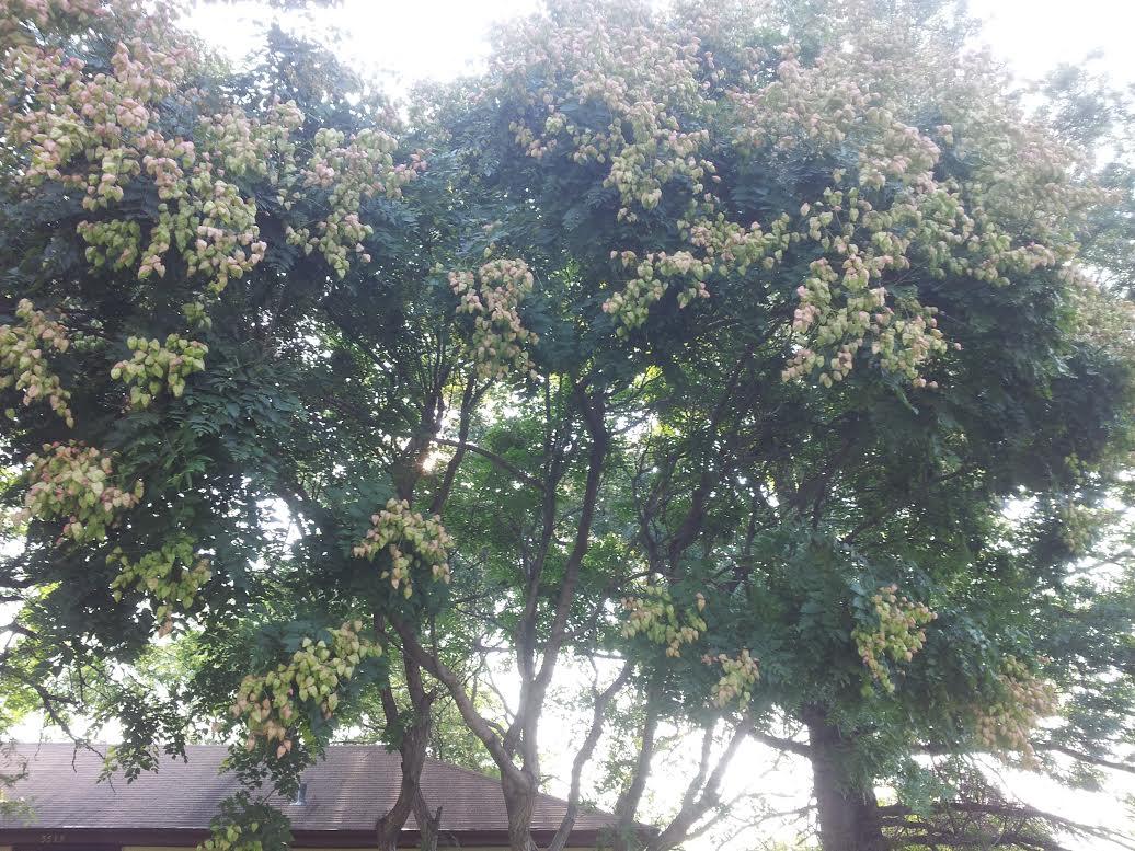 Flowering Trees Omaha