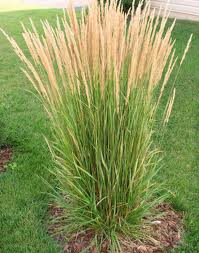 Ornamental Grasses Landscaping with ornamental grasses in omaha ornamental grasses workwithnaturefo
